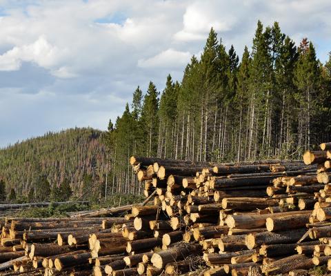 Holz Papier Wald